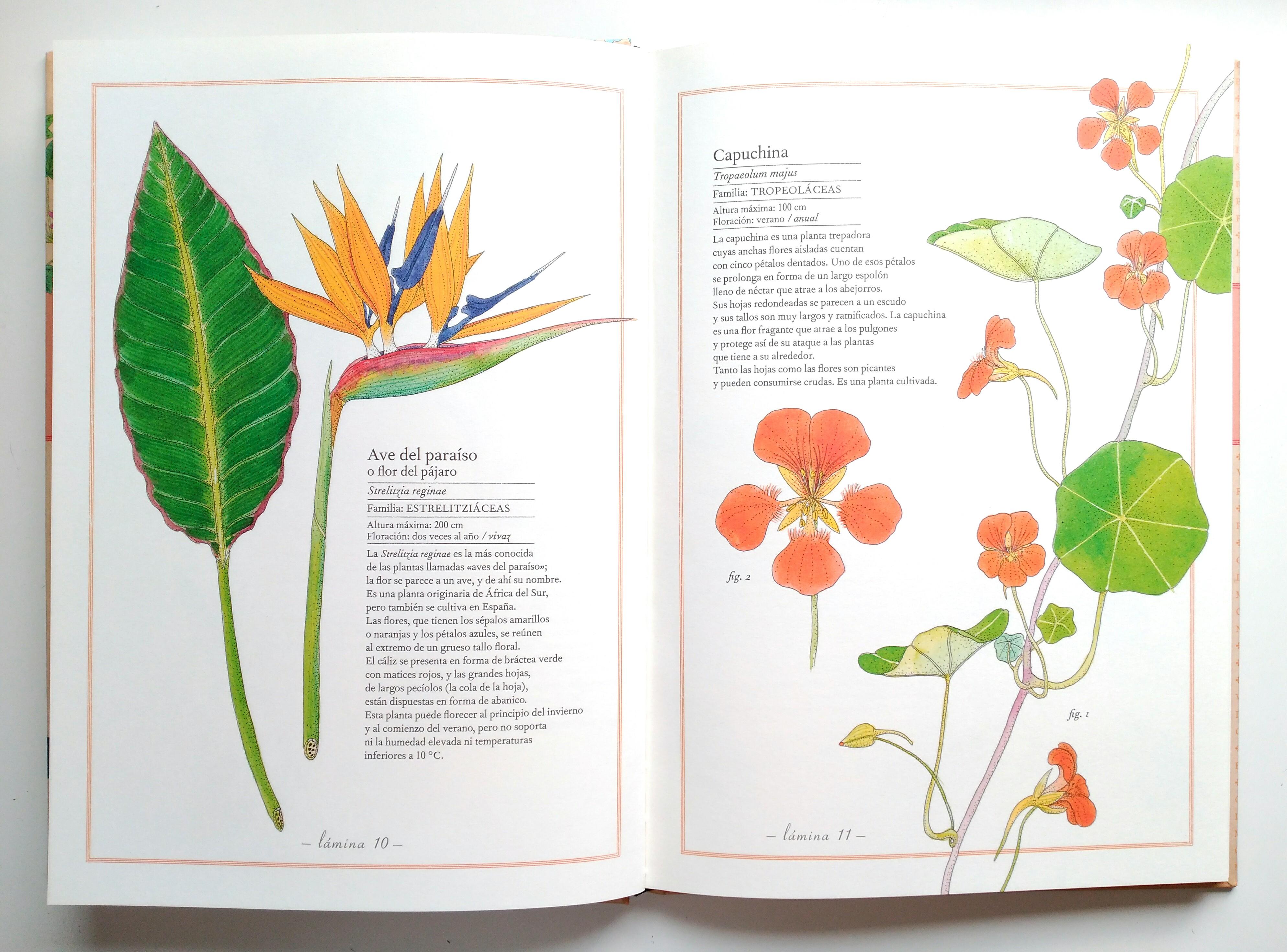 inventario-flores-kalandraka-rayuelainfancia